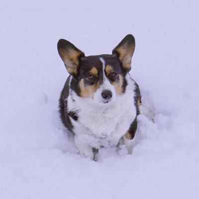 I Do Not Like Snow Print by Mike McGlothlen