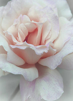 Rose Portrait Photograph - I Dream Of Roses by  The Art Of Marilyn Ridoutt-Greene