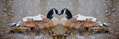 Canadian Geese Photograph - I Heart You by Betsy C Knapp