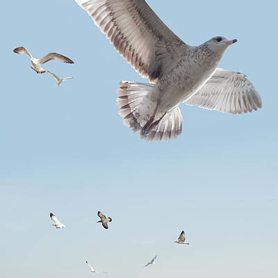 Seagull Digital Art - I Just Want To Fly by Bill Cannon