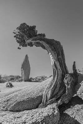 Joshua Tree Photograph - I Make You Look Small Black And White by Scott Campbell