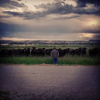 Cow Photograph - The Cow Whisperer by Denette Jacobson