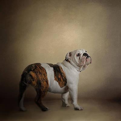 Bulldog Photograph - I Think I Smell A Treat - Bulldog Puppy by Jai Johnson