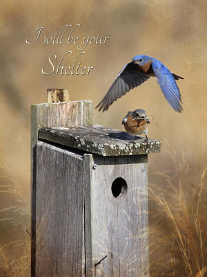 Bluebird Digital Art - I Will Be Your Shelter by Lori Deiter