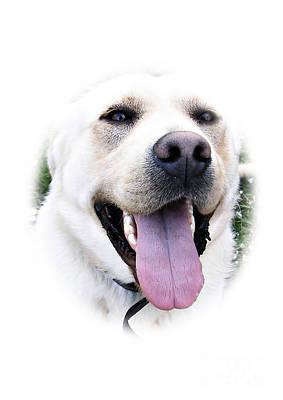 Labrador Photograph - I Love You - I Woof You by Eamonn Hogan