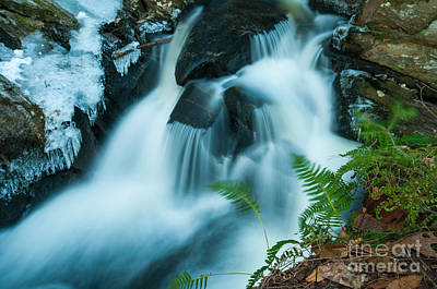 Nature Photograph - Waterfall - Ice And Ferns by JG Coleman