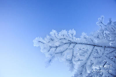 Winter Photograph - Ice On A Tree by Fabian Roessler