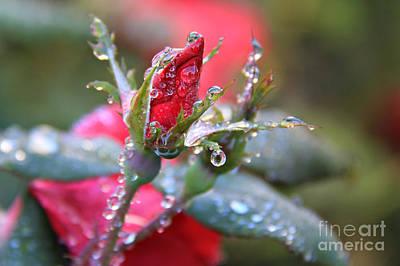 Ice Roses Print by Leslie Kirk