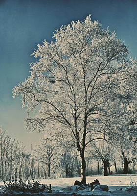 Winter Trees Photograph - Ice Sculpture by Odd Jeppesen