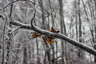 Ice Storm Print by Grant Little
