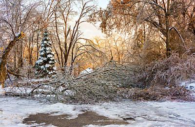 Ice Storm...day 2 Print by Steve Harrington
