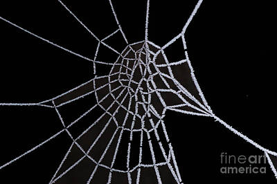 Abstract Forms Digital Art - Ice Web by Carol Lynch