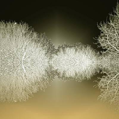 Snow Covered Trees Digital Art - Iced Woods by Sharon Lisa Clarke