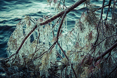 Lake Photograph - Icy Branch by Ari Salmela