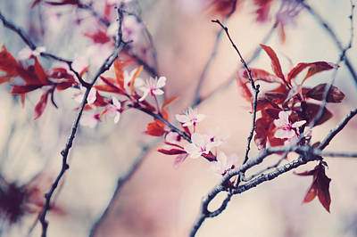 Icy Cherry Bloom. Pink Spring In Amsterdam Print by Jenny Rainbow