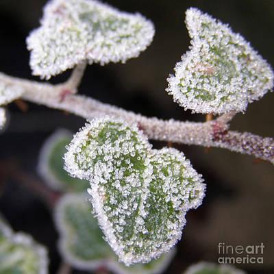Icy Ivy Print by Terri Waters