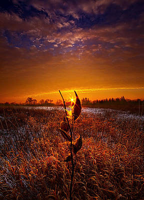 Fall Leaves Photograph - If Heaven Wasn't So Far Away by Phil Koch