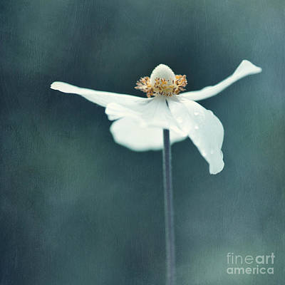 If  Petals Were Wings Print by Priska Wettstein