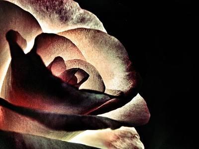 Goth Photograph - Illuminated Rose  by Marianna Mills