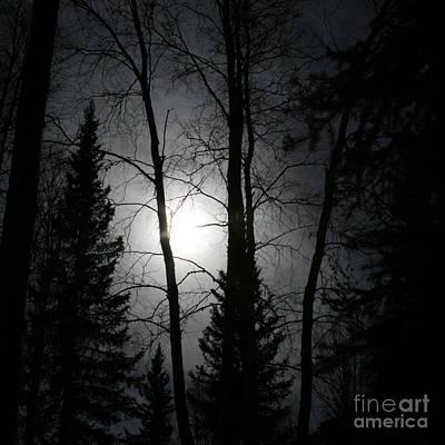 Midday Photograph - Illumination by Sharon Mau