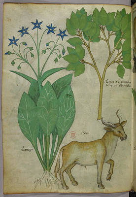Illustration Of Plants And A Bull Print by British Library