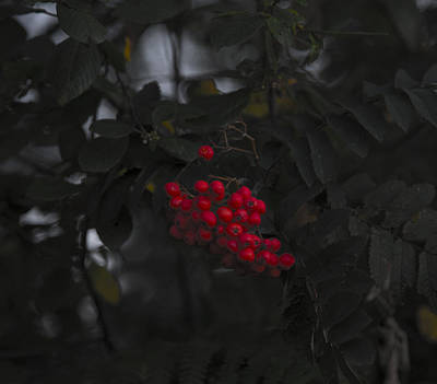 Photograph - Ilun by Jl Zufiria
