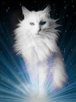 Cats Photograph - I'm A Star Baby I'm A Star II by Aurelio Zucco