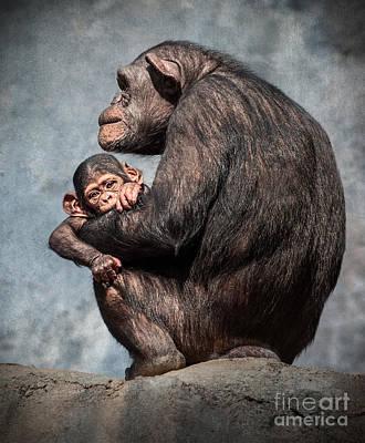 Chimpanzee  - I'm All Ears by Jamie Pham