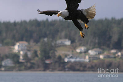 I'm Coming In For A Landing Print by Kym Backland