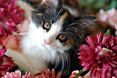 Cats Whiskers Bloom Photograph - I'm Just So Adorable by Kenny Francis