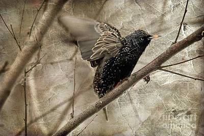 Starlings Digital Art - I'm Outta Here by Lois Bryan