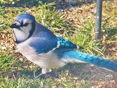 I'm So Blue Print by Judy Via-Wolff