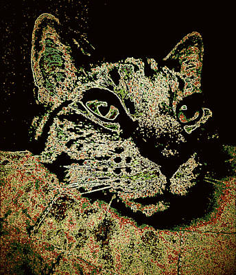 Gray Tabby Digital Art - I'm Sorry To Wake You Cat by Bob Gruber