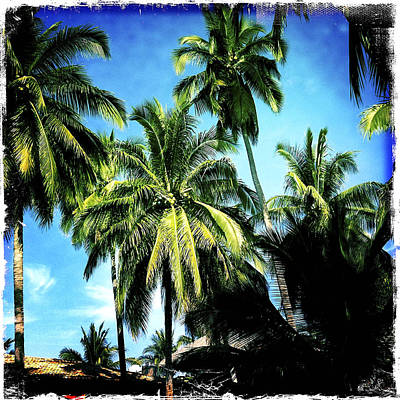 Haleiwa Photograph - Coco Palms by Stacy Vosberg