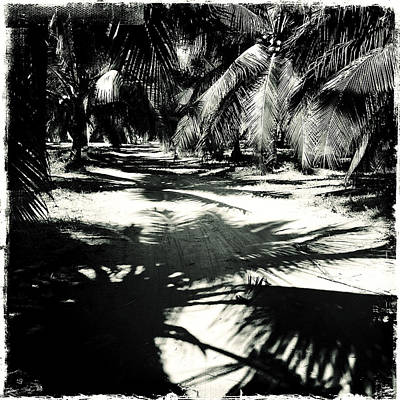 Haleiwa Photograph - Tropical Contrasts by Stacy Vosberg