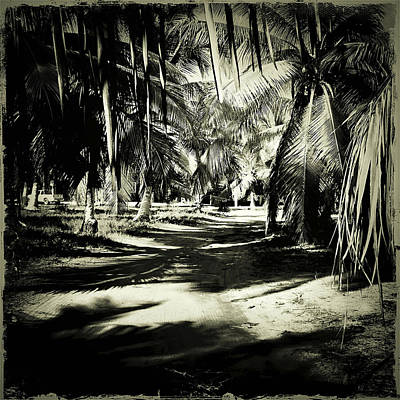 Haleiwa Photograph - In The Shadows by Stacy Vosberg