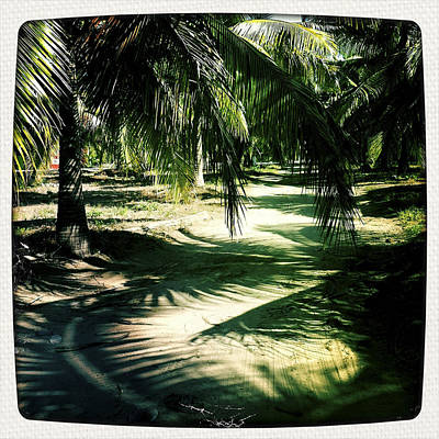 Haleiwa Photograph - Palm Shadows by Stacy Vosberg