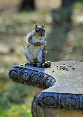 Squirrel Photograph - Imperial Squirrel - C1728a by Paul Lyndon Phillips