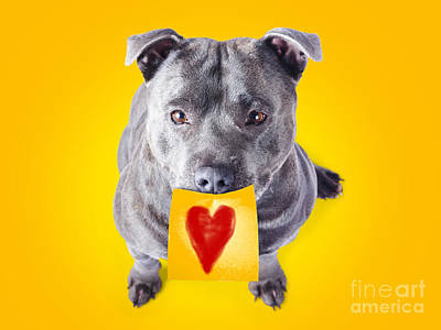 Imploring Staffie With A Sticky Note On His Mouth Print by Jorgo Photography - Wall Art Gallery