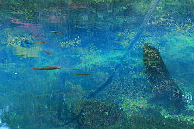 Impressionist Trout Print by Scott Rackers