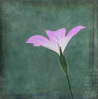 Garden Flowers Photograph - Impressions by Kim Hojnacki