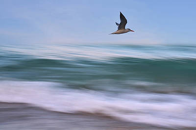 In Flight Print by Laura Fasulo