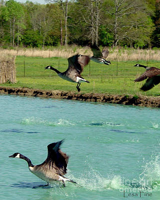 Canadian Geese In Flight Print by Lesa Fine