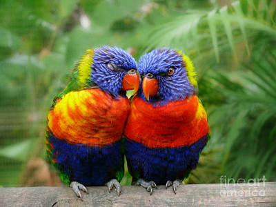 In Love Lorikeets Print by Peggy  Franz