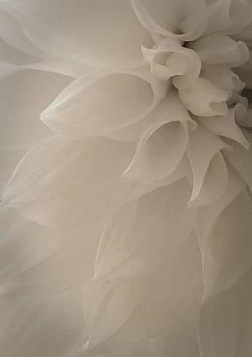 Flower Photograph - In My Fantasy by  The Art Of Marilyn Ridoutt-Greene