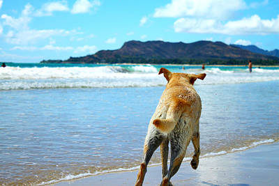Hawaii Dog Photograph - In Pursuit Of Happiness by Saya Studios