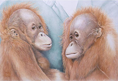 Orangutan Drawing - In Safe Hands - Orang Utans by Jill Parry