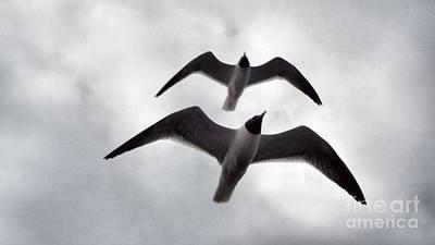 In Sync Flying Original by Audrey Van Tassell