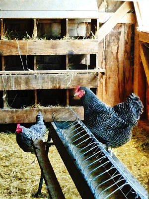 Roosters Photograph - In The Chicken Coop by Susan Savad