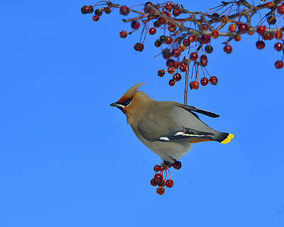 In The Crab Apple Tree Print by Tony Beck